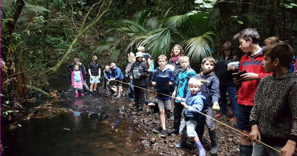 Freshwater - Ngamatapouri School students study by the stream